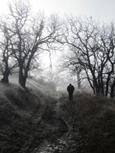 """Man Walking Through Trees Uphill in Fog"" by Melani Marx"