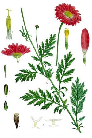 J15A10-flowerparts